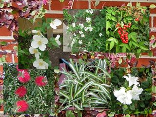 Flowers Mar 091