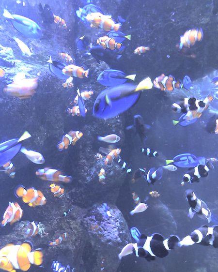 Finding Nemo LA