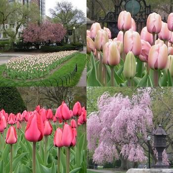 Boston_garden_collage